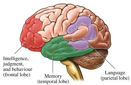 Behavior Changes Dementia